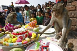 monkey-buffet