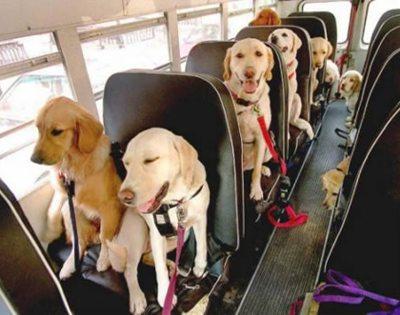 dog_bus