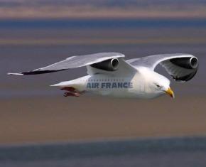 bird-air-france