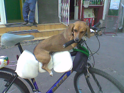dog_on_a_bicycle