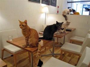 cat-restaurant