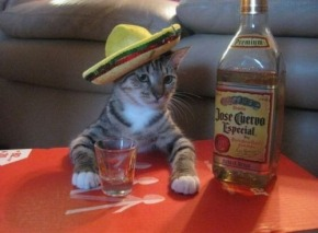 cat-and-tequila