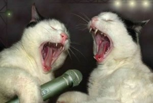 Drunk Karaoke Cats