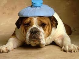 dog-hotwater